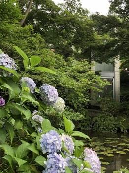 180629_庭園.JPG