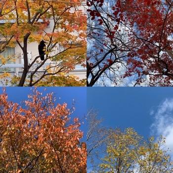 2018-12-木の葉の色づき.jpg